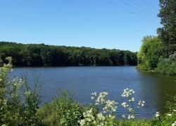 Озеро Гуральня в Винницкой области