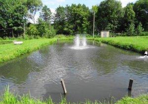 Форелевое хозяйство в Ганачевке Львовской области