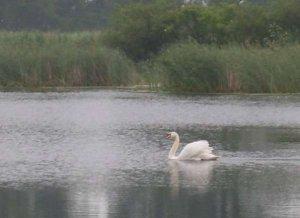 Озеро в Городыславичах Львовской области