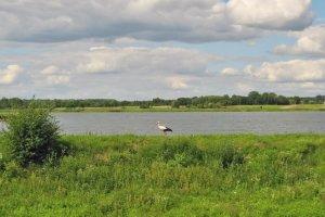Пруд в Ставчанах Львовской области