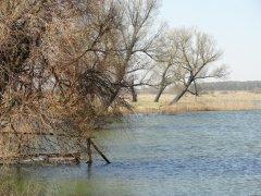 Рыбалка на ставке в с. Перковичи Волынской области-1