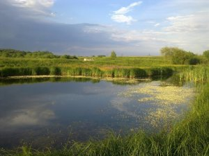 Рыбалка у села Александрия в Ровенской области-1
