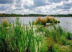 Рыбалка у села Новый Яр в Львовской области-1